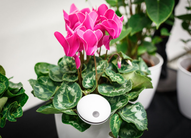 The $  99 Koubachi Wi-Fi plant monitor pokes into the soil and uploads environmental data to the company, which then sends plant-care alerts customized for each species.