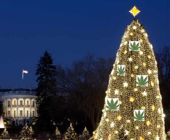 White House tree decked with marijuana