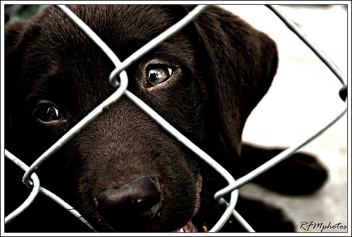 PUPS Act Introduced By US Lawmakers To Combat Abuse of Pets Sold Online